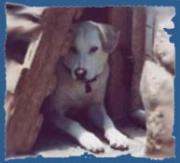 Informieren Sie sich über die Arbeit der Tierhilfe Fuerteventura e.V.